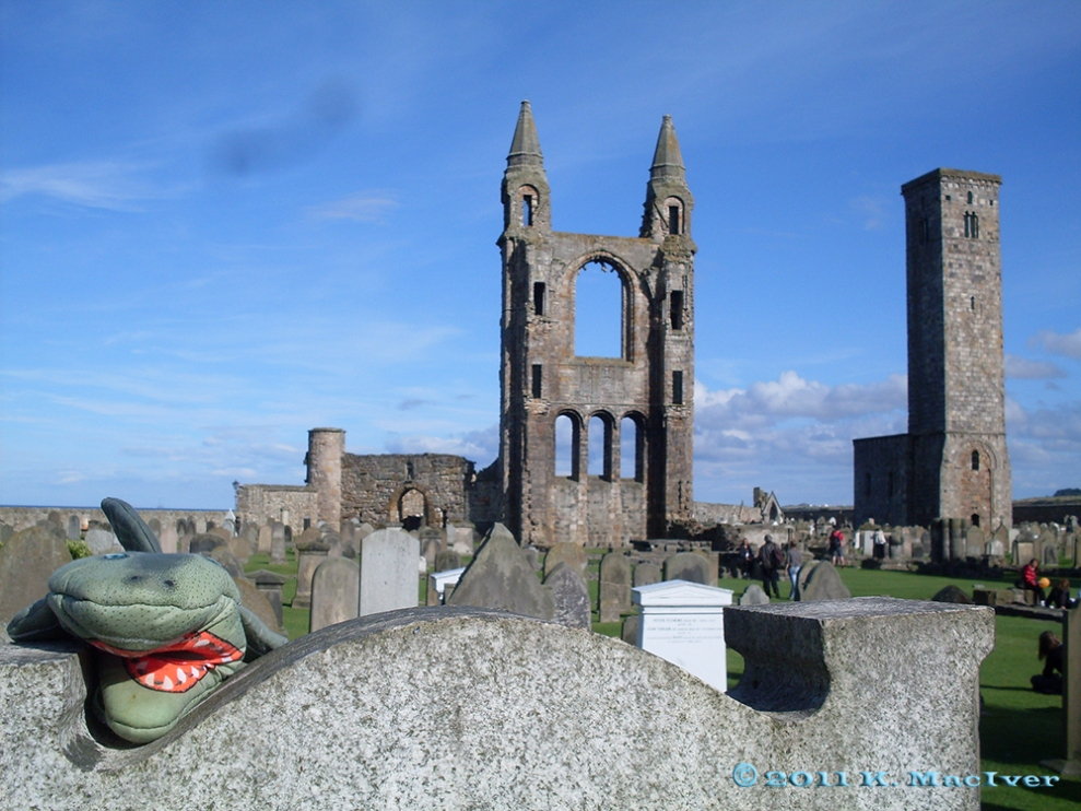 Toothy and one of St Andrews' most recognisable landmarks...